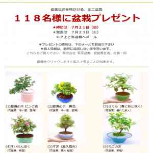 優美に花咲くミニ盆栽